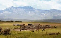 Pferdenbauernhof in der Landschaft Stockfotografie