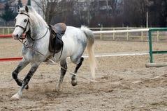 Pferdenbetrieb Stockbild