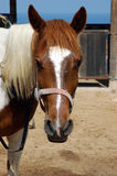 Pferdenblick Lizenzfreies Stockfoto