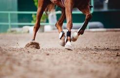 Pferdenfahrwerkbeine Laufen Stockfoto