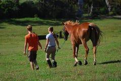 Pferdenfreunde Stockbild