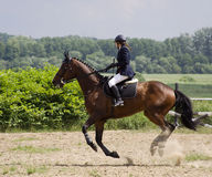 Pferdengalopp Stockfotografie