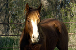 Pferdenidee Lizenzfreies Stockfoto