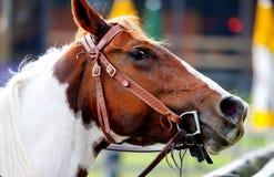 Pferdenkopf stockfotos
