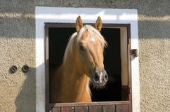 Pferdenkopf Lizenzfreies Stockbild