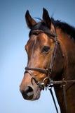 Pferdenkopf Lizenzfreie Stockfotos