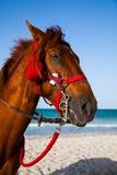 Pferdenkopfportrait Stockbild
