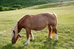Pferdenlandschaft in der grünen Wiese Pyrenees Lizenzfreie Stockfotos