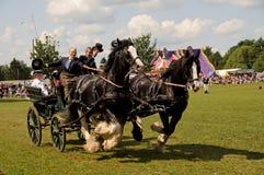 Pferdenlastwagen Lizenzfreie Stockfotos