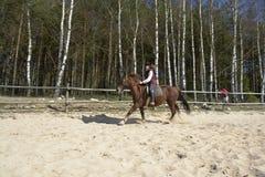 Pferdenmitfahrer Stockbilder