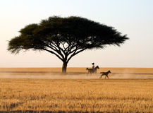 Pferdenmitfahrer lizenzfreie stockfotografie