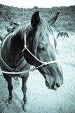 Pferdennahaufnahme Stockfoto