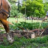 Pferdenpflügen Stockfotografie