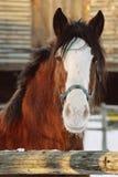 Pferdenportrait Stockfotos