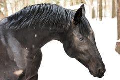 Pferdenportrait Stockbilder