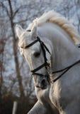 Pferdenportrait in der Bewegung Lizenzfreies Stockfoto