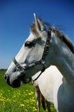 Pferdenportrait am sonnigen Tag Stockfotos