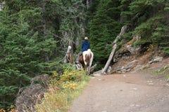 Pferdenreiten Lizenzfreies Stockbild