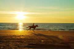 Pferdenreiten Lizenzfreie Stockfotografie