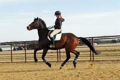 Pferdenreiten Stockbilder