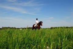 Pferdenreiten auf dem Heugebiet Lizenzfreies Stockbild
