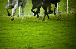 Pferdenrennen Stockfoto