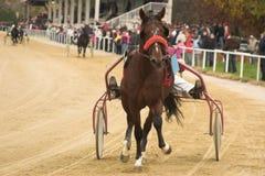 Pferdenrennen Lizenzfreies Stockbild