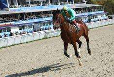 Pferdenrennen. Stockfotografie