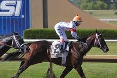 Pferdenrennen. Lizenzfreie Stockbilder