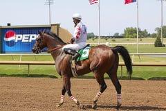 Pferdenrennen. Stockbild
