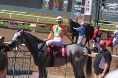 Pferdenrennen. Stockfotos