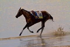 Pferdenrennen auf Sanlucar von Barrameda Lizenzfreie Stockbilder