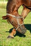 Pferdenschönheit lizenzfreie stockfotografie