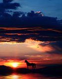 Pferdenschattenbild 3 Lizenzfreie Stockfotos