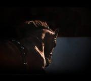 Pferdenschattenbild auf dem dunklen Hintergrund Lizenzfreie Stockfotografie