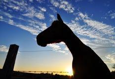 Pferdenschattenbild im Sonnenuntergang auf Landbauernhof Stockfotografie