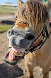 Pferdensprache Stockbilder