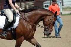 Pferdentraining Stockfotografie