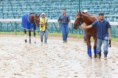 Pferdenzufuhren an der Rennenspur Stockfotografie