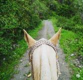 Pferdeohren Stockfoto