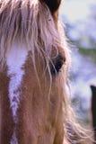 Pferdeporträt Stockfoto