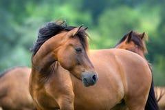 Pferdeportrait in der Herde Stockfoto