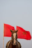 Pferdeportrait mit einer roten marokkanischen Flagge und einem klaren Himmel stockfotografie