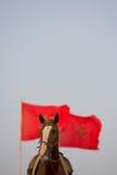 Pferdeportrait mit einer roten marokkanischen Flagge und einem klaren Himmel Stockbild