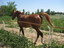 Pferderückseite Lizenzfreies Stockfoto