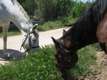 Pferderückseite Lizenzfreies Stockbild