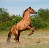 Pferderückseiten Lizenzfreie Stockfotos