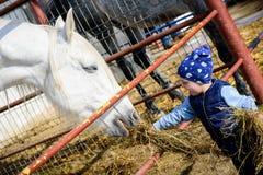 Pferderanch F?tterungspferd des Jungen lizenzfreie stockbilder