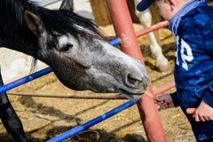 Pferderanch F?tterungspferd des Jungen stockfoto