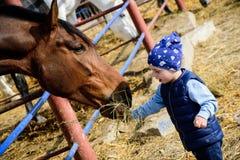 Pferderanch F?tterungspferd des Jungen lizenzfreies stockfoto